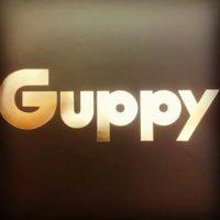 24-guppy